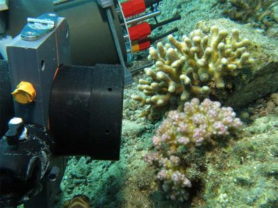 The Benthic Underwater Microscope is put in positioned to study coral competition. Credit: Jaffe Laboratory for Underwater Imaging/Scripps Institution of Oceanography, UC San Diego