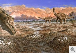 """Sauropod dinosaurs at a shared nesting site in the Late Cretaceous. Artist: Mark Hallett. Source: """"The Sauropods: Evolution and Paleobiology."""" Kristina A. Curry Rogers and Jeffrey A. Wilson, eds. University of California Press, Berkeley, 2005."""
