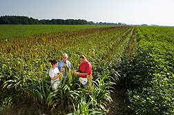 Agricultural Research Service (ARS) entomologist Patricia Glynn Tillman (center), technician Kristie Graham (right), and student technician Brittany Giles evaluate a sorghum trap crop being used to control stink bugs in adjacent fields of peanuts and cotton.