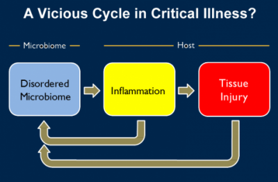 A simplified version of  what might be going on in the lungs of people with critical illness.