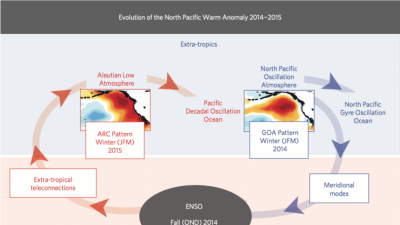 North Pacific Gyre and the evolution of the marine heat wave.