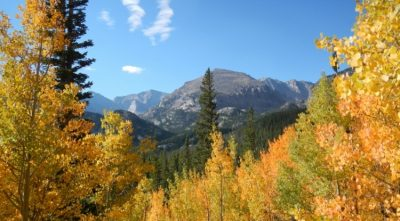 A sub-alpine forest in Colorado. Forests in the southwestern U.S. are expected to be among the hardest hit, according to the projections resulting from the study. Image credit: Sydne Record