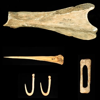 Artificats from the Glenwood site include a scapula hoe, an awl, fish hooks, and a fish hook blank. Photo courtesy of the Office of the State Archaeologist.