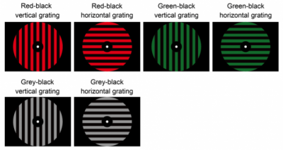 Participants in a set of experiments were unknowingly trained to associate red with vertical stripes, even when the background was gray or green. Credit: Watanabe et. al.
