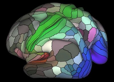 The researchers discovered that our brain's cortex, or outer mantle, is composed of 180 distinct areas per hemisphere. For example, the image above shows areas connected to the three main senses – hearing (red), touch (green) vision (blue) and opposing cognitive systems (light and dark). The map is based on data from resting state fMRI scans performed as part of the Human Connectome Project. Matthew Glasser, Ph.D., and David Van Essen, Ph.D., Washington University