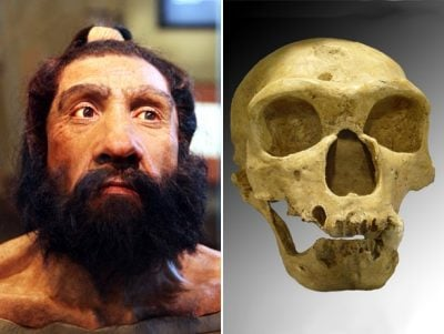 The reconstruction of a head of a Neanderthal man, at left, and a Neanderthal skull. One gene identified by UW Medicine and other researchers may be the first identified that distinguishes humans from the Neanderthals. Image credit: Wikimedia Commons, Tim Evanson