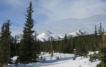 A Colorado Rocky Mountain forest during the winter-spring transition period, which is changing. Scientists found that earlier snowmelt reduces the ability of forests to regulate atmospheric CO2. Image credit: Keith Jennings