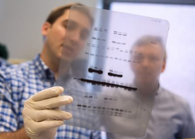 Troy Hubbard, Ph.D candidate in molecular biology, left, reviews as chart of proteins collected from a sample with Dr. Gary Perdew in their Life Sciences Lab at Penn State. The researchers are part of a team that examined whether a genetic mutation that is now ubiquitous in humans increased our tolerance to smoke, leading to an evolutionary advantage over other hominins, such as Neandertals. Image: Patrick Mansell