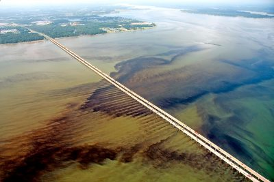 A massive algal bloom at the Monitor-Merrimack Bridge where Route 664 crosses the James River near Hampton Roads. Image credit: Wolfgang K. Vogelbein/Virginia Institute of Marine Science