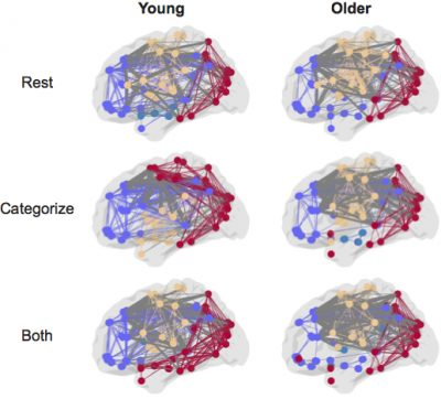 While performing tasks of any difficulty older adults recruited additional between-module connections (gray). In contrast, younger adults only recruited additional between-module connections for the most difficult task, recalling both scenes and faces.