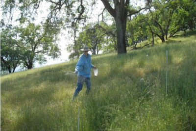 Lead author Stan Harpole spreading fertilizer at one of 45 research sites on six continents from which data was gathered for the study. Image credit: Nutrient Network