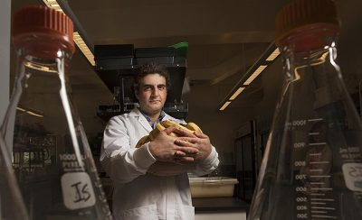 """Plant pathologist Ioannis Stergiopoulos says discovery of how three fungal diseases attack banana plants should be a """"wake-up call"""" to the research community. Credit: Gregory Urquiaga/UC Davis"""
