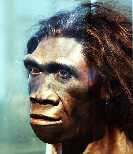 There is no denying that brain of human ancestors was significantly smaller, but they were also much less energetically costly. Image credit: Tim Evanson via Flickr, CC BY-SA 2.0