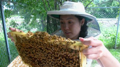 Judy Wu-Smart, an entomologist at the University of Nebraska-Lincoln, has published new research suggesting that a popular class of nicotine-based insecticides can have substantial effects on honey bee colonies.