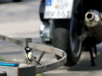 For the study, citizens with an interest in nature could sponsor a nest box and observe its residents with the help of a webcam. The camera images were transmitted directly to the mobile phone of the sponsors. Credit: Ph. Sprau