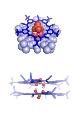 The bisulfate dimer as seen from the top down (upper image) and side (lower image). The two negatively charged molecules are connected by weak bonds made possible through encapsulation inside a pair of a star-shaped cyanostar macrocycles (blue), a molecule previously developed by Flood's lab at IU. | Photo by Indiana University