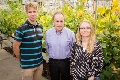 Stephen P. Long, a professor of crop sciences and of plant biology, center, with postdoctoral researchers Johannes Kromdijk, left, and Katarzyna Glowacka, increased plant yield by altering a mechanism plants use to protect themselves from excess solar energy. Photo by L. Brian Stauffer