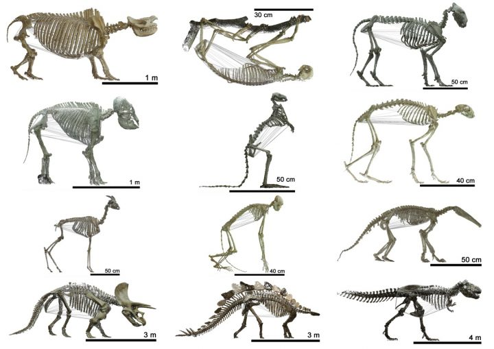 Scientists studied 120 tetrapods from prehistoric times up to the present day. Image credit: media.uzh.ch.