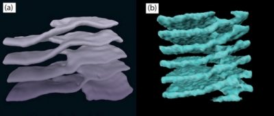Similar shapes — structures consisting of stacked sheets connected by helical ramps — have been found in cell cytoplasm (left) and neutron stars (right).