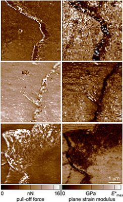 NIST researchers used atomic force microscopy (AFM) to measure the stickiness (pull-off force) and stiffness (plane strain modulus) of hair that was untreated (top), bleached (middle), and conditioned (bottom). The clear differences in the measured results for various hair treatments suggest that AFM might be used to analyze forensic evidence. The measured forces are very small, in units of nanonewtons or nN (1 nanonewton is about the weight of a pollen grain). Modulus is in units of gigapascals or GPa and ranges from 1-5 for the hair samples (for comparison, the plastic lens material polycarbonate measures about 3).