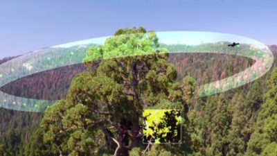 A camera-equipped drone can scan the same tree multiple times a day to produce digital maps of the leaves and branches (inset) as they change their respiration and photosynthesis throughout the day.