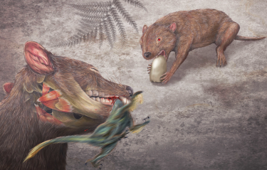 A rendering of the early marsupial relative, Didelphodon vorax. Image credit: Misaki Ouchida