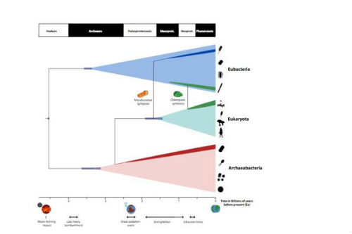 A timescale for the evolution of life on planet Earth summarising the findings of Betts et al. study. Image credit: Holly Betts, University of Bristol