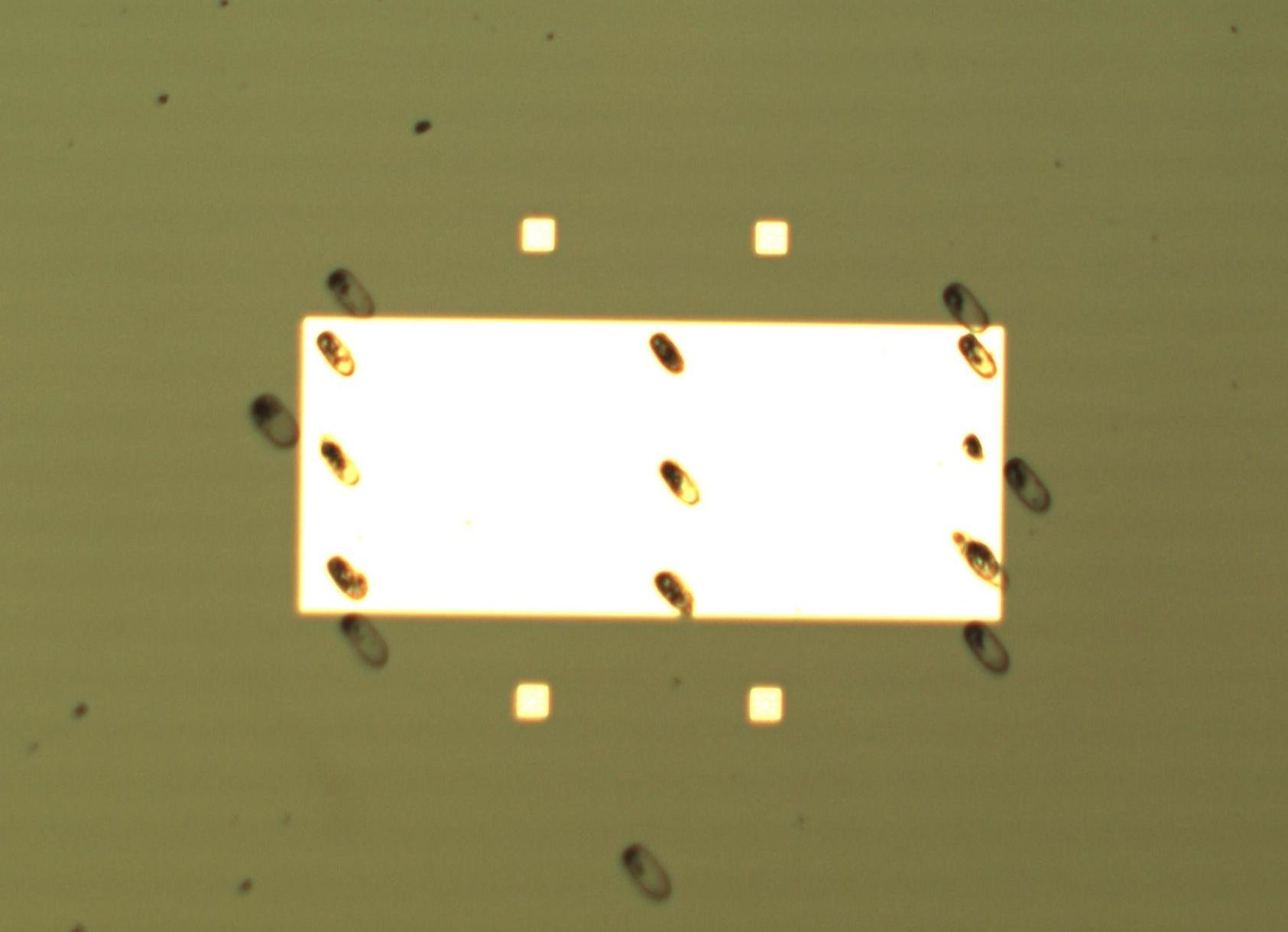 In the device, which is about the size of a fingernail, clusters of diamond nanocrystals (black spots) sit atop a material called a multiferroic. The multiferroic transmits microwave energy into the crystals much more efficiently than other methods.