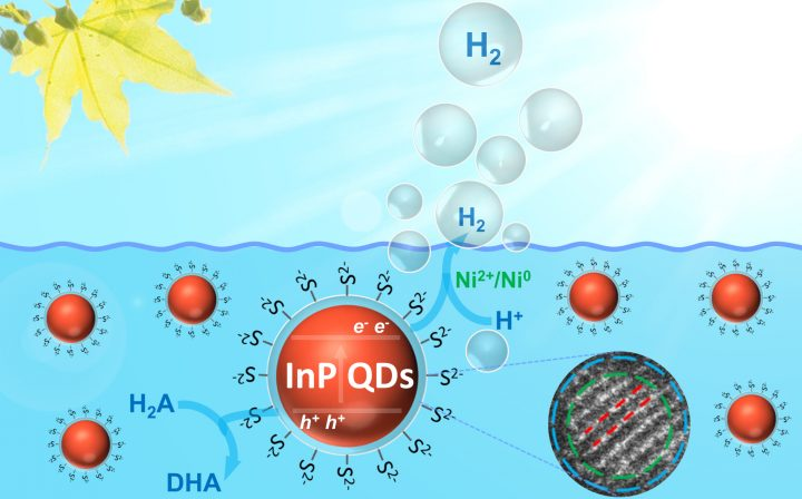 Schematic representation of photocatalytic hydrogen production with InP/ZnS quantum dots in a typical assay. Image credit: Shan Yu/Southwest Petroleum University in Chengdu