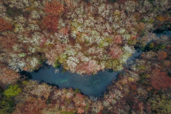 Wakulla's browning waters are a local illustration of global environmental changes. Image credit: FSU