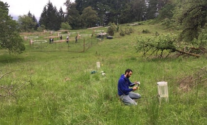 Lucas Silva in the field at one of his three research locations
