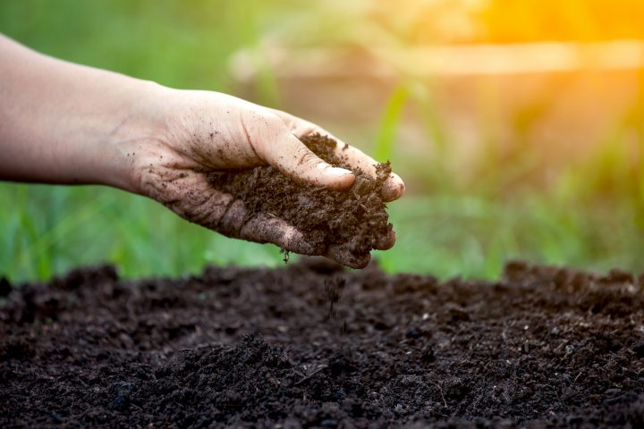 Soil is a rich source of bacteria, some of which produce molecules that act as natural antibiotics. Image credit: USDA