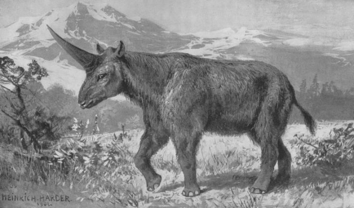 The Siberian Unicorn. Image credit: Heinrich Harder