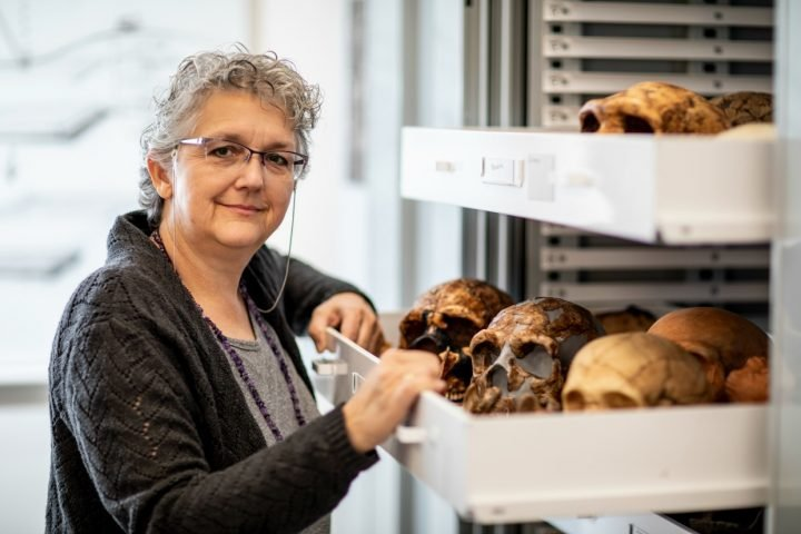 Patricia Kramer, a University of Washington professor of anthropology, is part of an international team that completed a virtual 3D reconstruction of portions of a Neandertal skeleton. Here, she shows part of the collection of model Neandertal skulls at Denny Hall. Image credit: Dennis Wise/U. of Washington