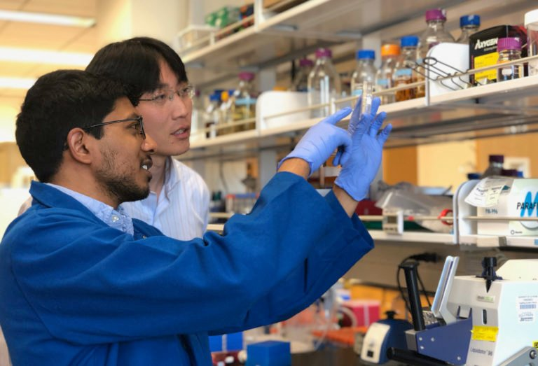 Arjun Ravikumar, who recently earned his Ph.D. in biomedical engineering at UCI, and his advisor, Chang Liu, UCI assistant professor of biomedical engineering, collaborated on a study published in Cell that details a new method for simplifying and accelerating directed evolution experiments in labs. Image credit: Kim Makuch / UCI