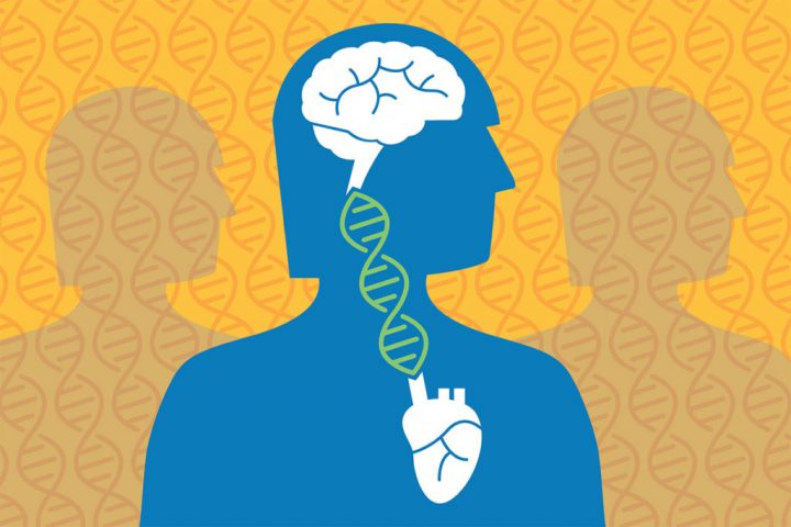 In the largest genetic study of Alzheimer's disease, researchers at Washington University School of Medicine in St. Louis and the University of California, San Francisco, have found that genes that increase risk of cardiovascular disease also heighten the risk for Alzheimer's. Illustration by Michael Worful, Washington University in St. Louis