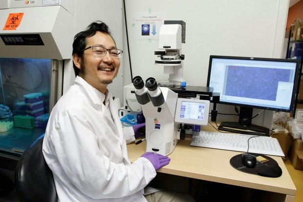 Peter Yang and his colleagues have identified two of the genes responsible for the rapid growth of deer antlers. Image credit: Paul Sakuma / Stanford Medicine