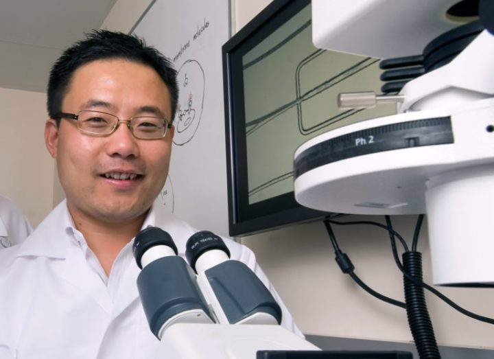 """This technology is particularly exciting because it dismantles major challenges in cancer treatments,"" Weian Zhao says. Image credit: Steve Zylius / UCI"