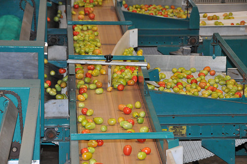 An automated packing line. Image credit: Hakim Fobia / USDA