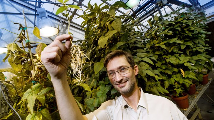 Nebraska plant scientist Marc Libault seeks to better understand soybeans and other legumes' mutually beneficial relationship with the bacteria rhizobia. Image credit: Craig Chandler, University of Nebraska–Lincoln