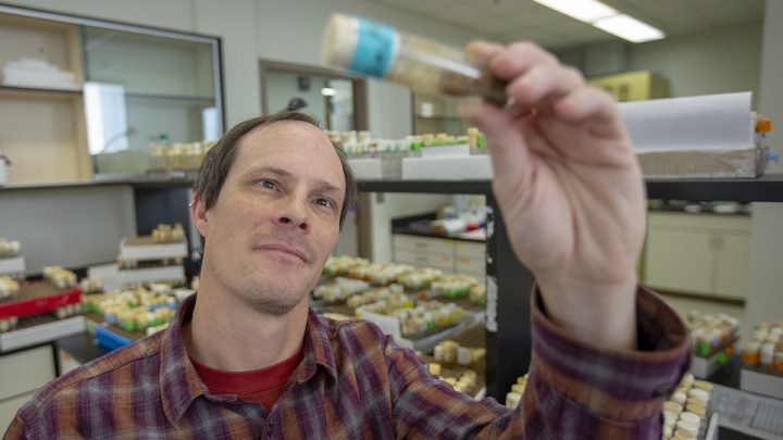 Nebraska's Colin Meiklejohn and colleagues have shown that selfish genes -- those that end up in more than 50 percent of offspring -- can unexpectedly erode the genetic barriers between species. Image credit: Troy Fedderson | University of Nebraska-Lincoln
