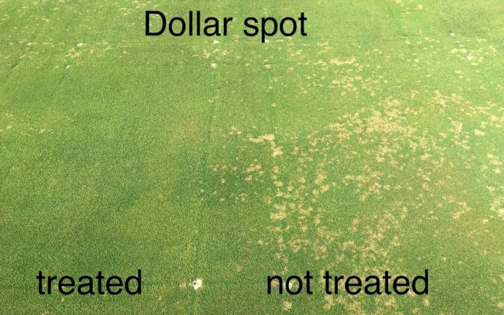 Dollar spot is the biggest disease problem on Wisconsin golf courses. Fungicide spraying is expensive but effective. A dollar-spot app, based on analyses at UW–Madison's department of plant pathology advises golf-course superintendents when to spray, allowing control while minimizing pesticide runoff. Illustration by Paul Koch