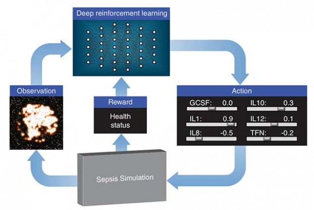 """LLNL's deep learning approach treats the immune system simulation developed by their collaborators as a video game. Using outputs from the simulation, a """"score"""" based on patient health and an optimization algorithm, the neural network learns how to manipulate 12 different cytokine mediators — immune system regulators — to drive the immune response to infection back down to normal levels. Image credit: LLNL"""