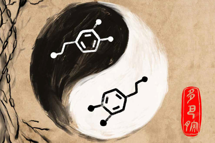 UC Berkeley researchers have discovered that the brain neurotransmitter dopamine has a yin-yang personality, mediating both pleasure and pain. Illustration by Christine Liu / UC Berkeley