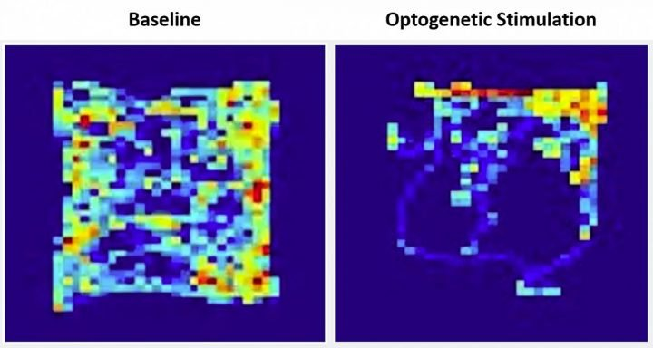"Heatmaps showing the amount of time a mouse spent in locations of the open field chamber at baseline (left) and during optogenetic stimulation of the cerebellar input to the VTA (right). The ""reward quadrant"" is located in the upper right section of the field. Image credit: Albert Einstein College of Medicine"