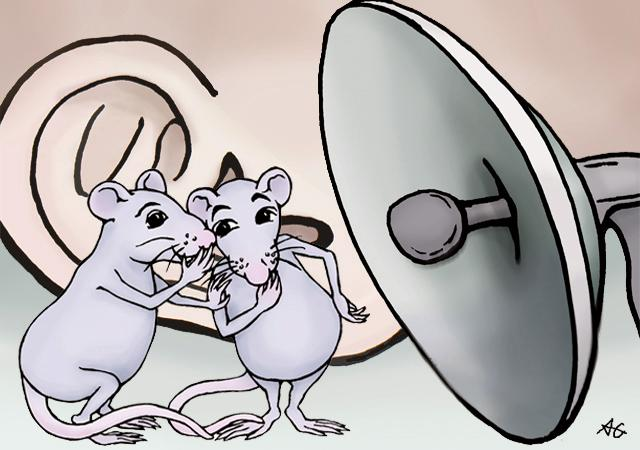 Mice and rats have a rich repertoire of around 20 kinds of calls, said UW Medicine researchers. Image credit: Alice Gray / University of Washington