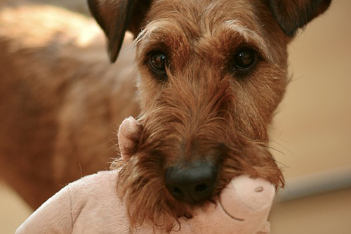 Dog with a toy. Free image via Pixabay