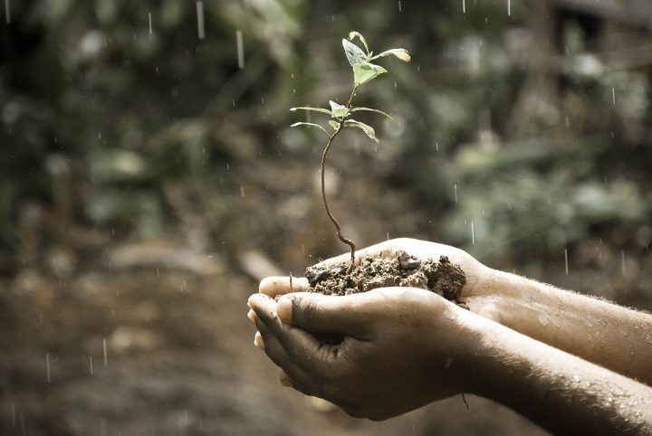 Hands holding a plant with a bit of soil. Image credit: Pexels via Pixabay, CC0 Public Domain