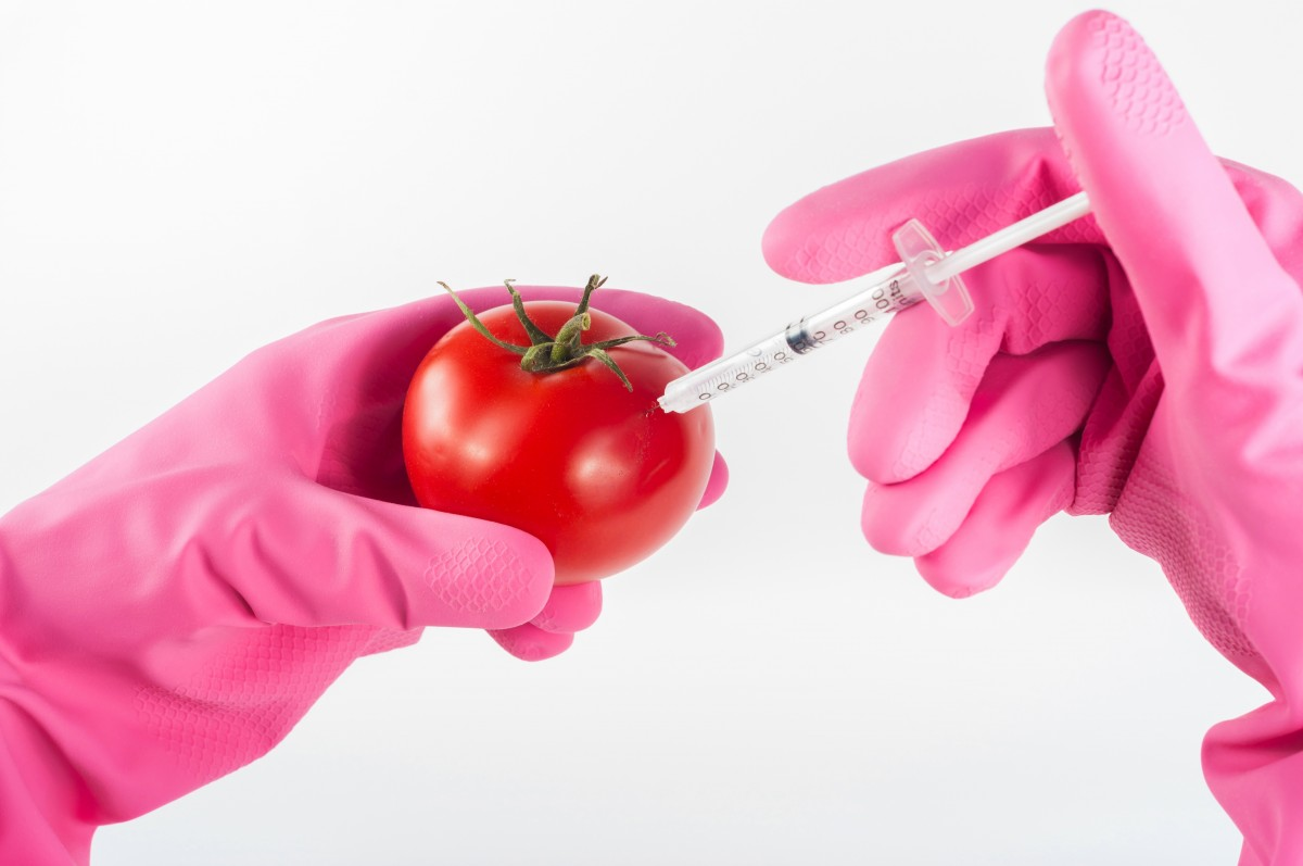 GMO, or genetically modified organisms, include food-related products. Image credit: Pxhere, CC0 Public Domain