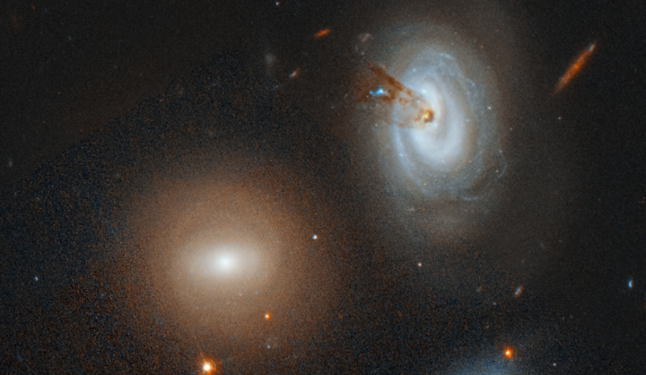 The spiral galaxy D100, on the far right of this Hubble Space Telescope image, is being stripped of its gas as it plunges toward the center of the giant Coma galaxy cluster. Image credit: NASA, ESA, M. Sun (University of Alabama), and W. Cramer and J. Kenney, Yale University